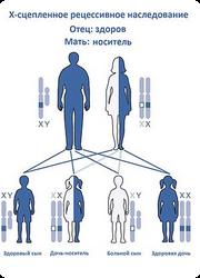 передача генов