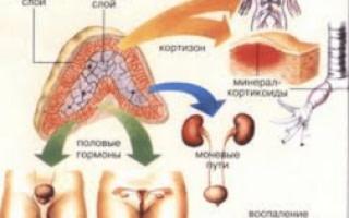 Аденома надпочечника у женщин: причины, симптомы и развитие болезни