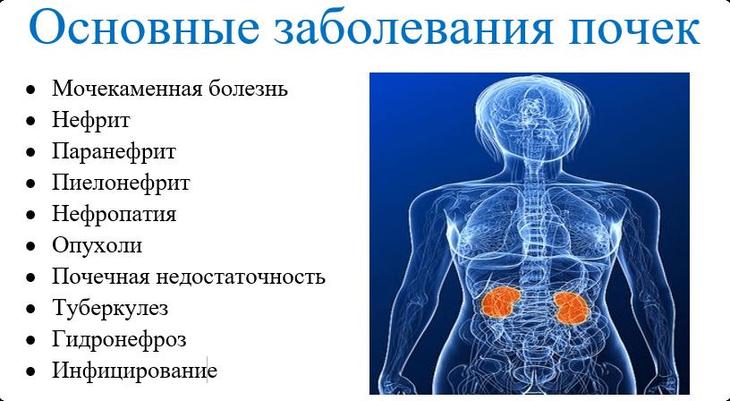 основные болезни почек